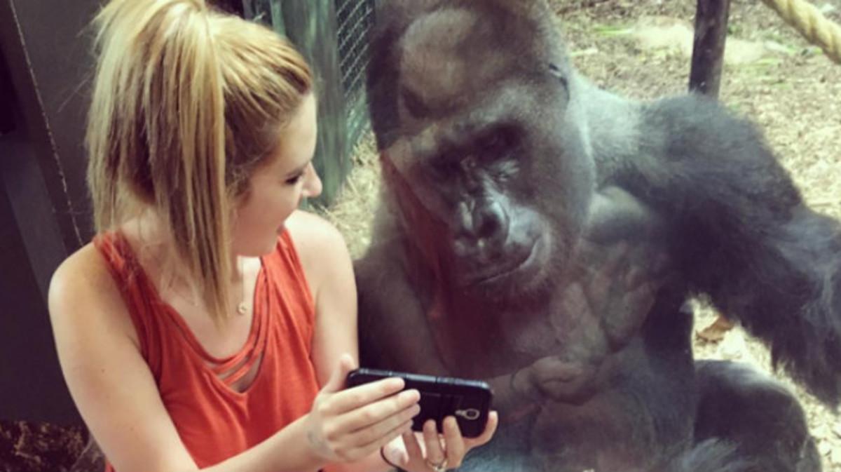 Costello y Jerani, viendo un vídeo de bebés gorilas en un 'smartphone'.