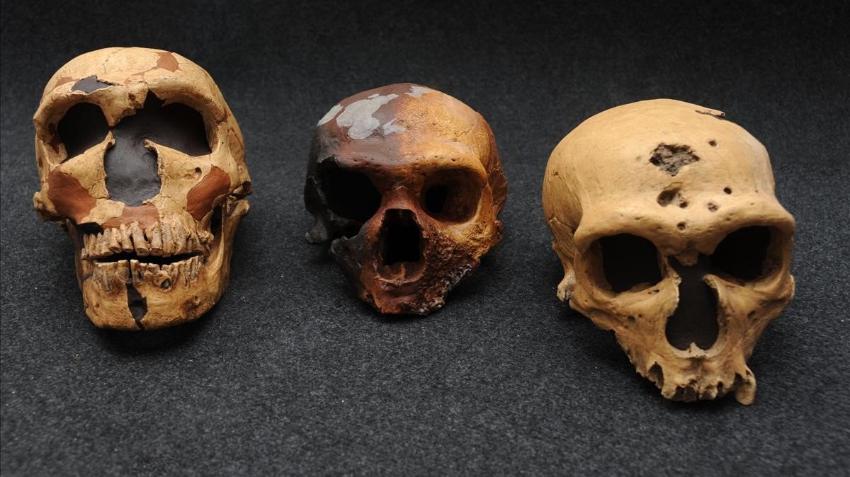 Imagen de archivo de cráneos de neandertales