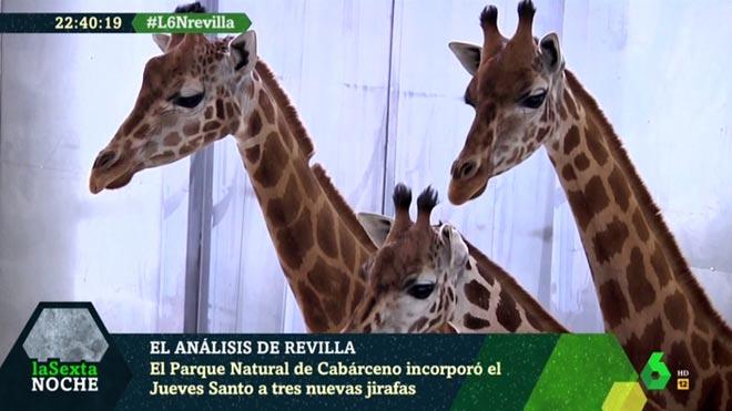Las tres jirafas ('La Sexta noche').