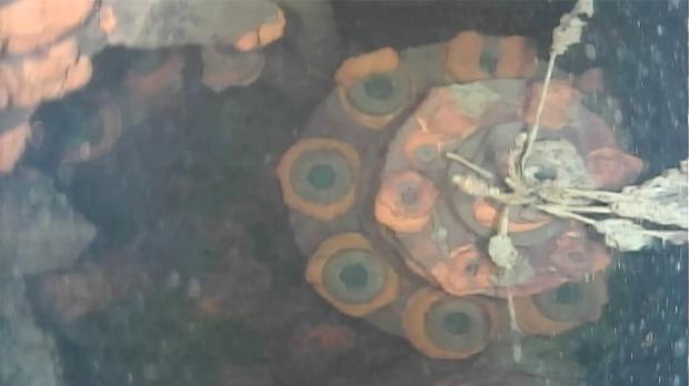 Primeres imatges captades pel robot aquàtic de Fukushima.