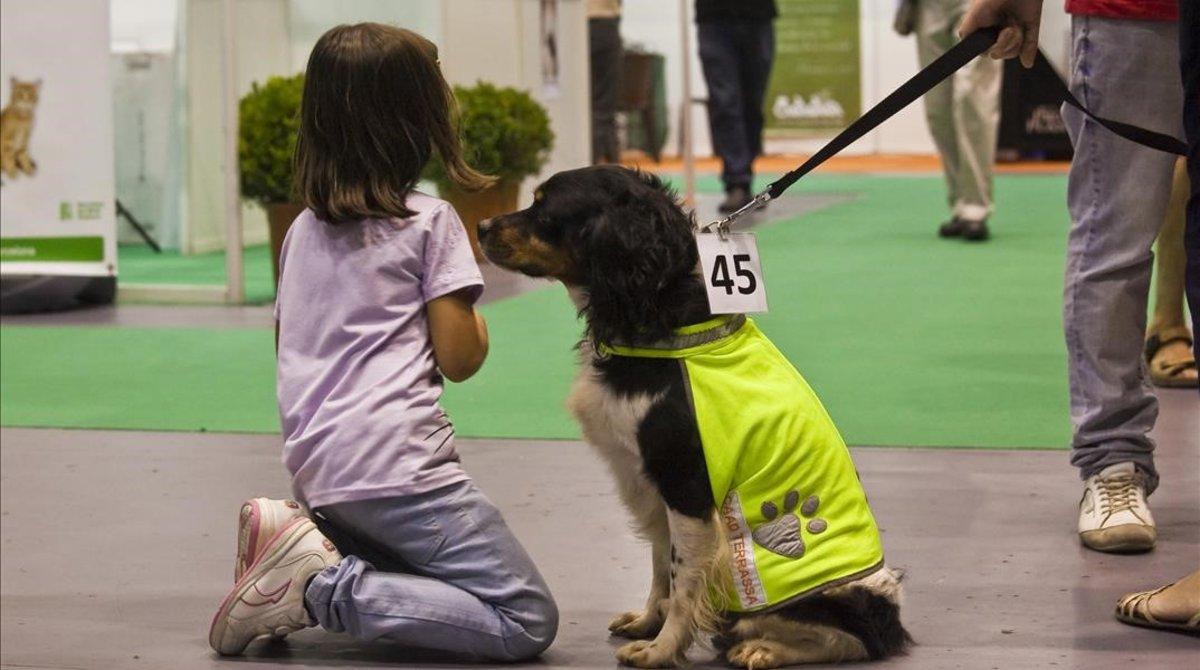 Una niña juega con un perro abandonado.