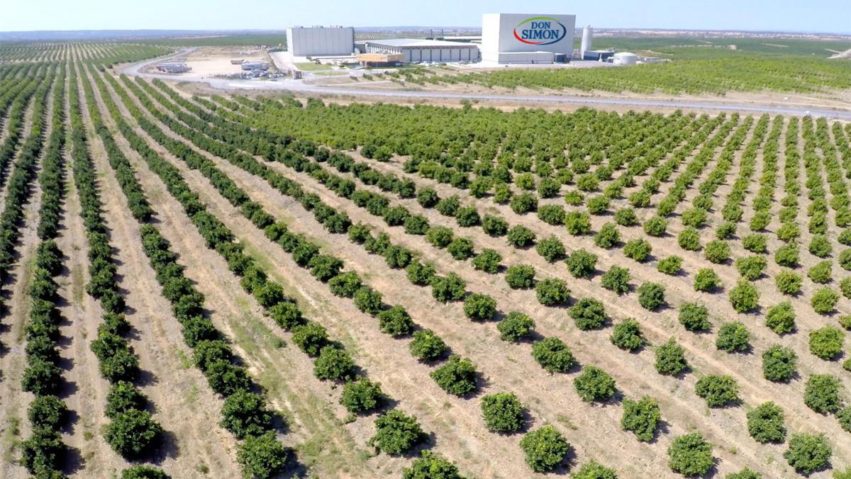 Vista panorámica de los campos de naranjas y la planta envasadora de Don Simón en Huelva.