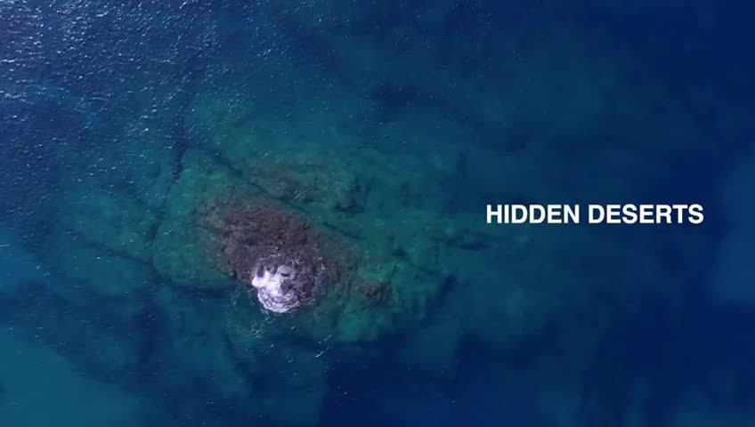 Emergència ambiental marina