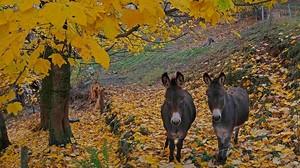 EQUINOCCIO DE OTOÑO: Paisaje otoñal en las montañas de los Vosgos, en Francia.