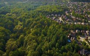 Los bosques urbanos pueden ser la solución al cambio climático.