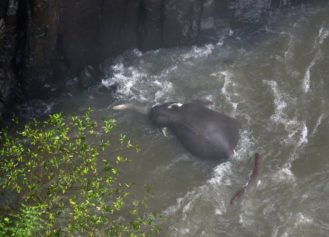 Khao Yai (Thailand), 09/10/2019.- One of the elephants that died in Haew Narok Waterfall in Khao Yai National Park, Prachin Buri Province, Thailand, 09 October 2019. The officials confirm on 08 October 2019 that the herd had thirteen elephants, and that they are expecting that two of them survived and eleven elephants died, after falling into Haew Narok Waterfall in Khao Yai National Park on 05 October 2019, said the national park official. (Tailandia) EFE/EPA/NARONG SANGNAK