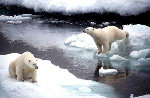 BEA02.ALASKA.15/5/2008.-Fotografía de archivo del 2 de noviembre de 1998 que muestra a dos osos polares saltando de un bloque de hielo a otro en Alaska. Estados Unidos anunció el 14 de mayo de 2008 que incluirá al oso polar como un animal protegido, por la amenaza que supone para esta especie el calentamiento global. El secretario del Interior, Dirk Kempthorne, alertó del alarmante descenso del nivel de la superficie de hielo en el Ártico en las últimas tres décadas debido al calentamiento global y se prevé que siga disminuyendo.Esta designación, explicó, significa que el oso polar es una especie que podría estar en peligro de extinción en un futuro cercano. EFE/ ARCHIVO/GREENPEACE HO