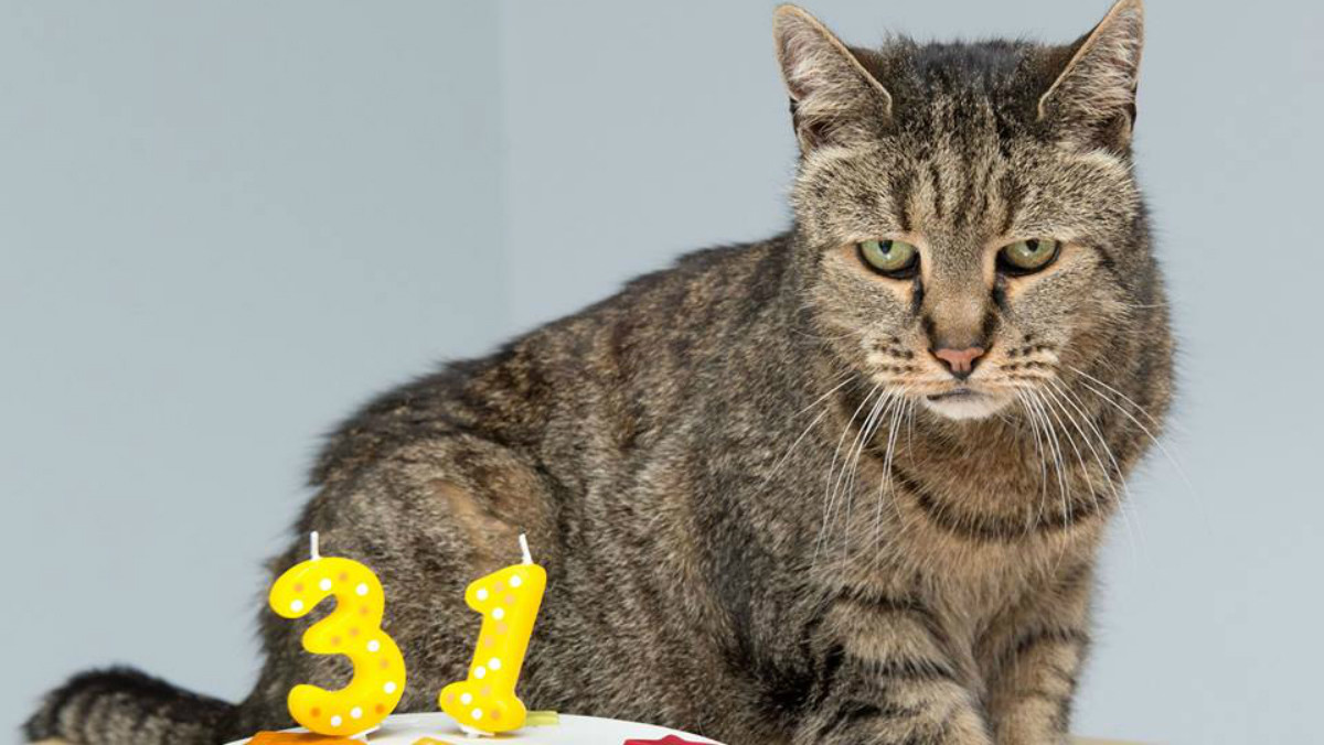 El gatoNutmeg, en su 31º aniversario.