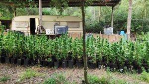 Imagen de los Mossos de una de las plantaciones de marihuana.