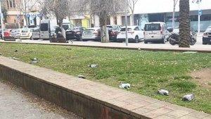 Los cuerpos de varias palomas muertas en el barrio dePep Ventura de Badalona.