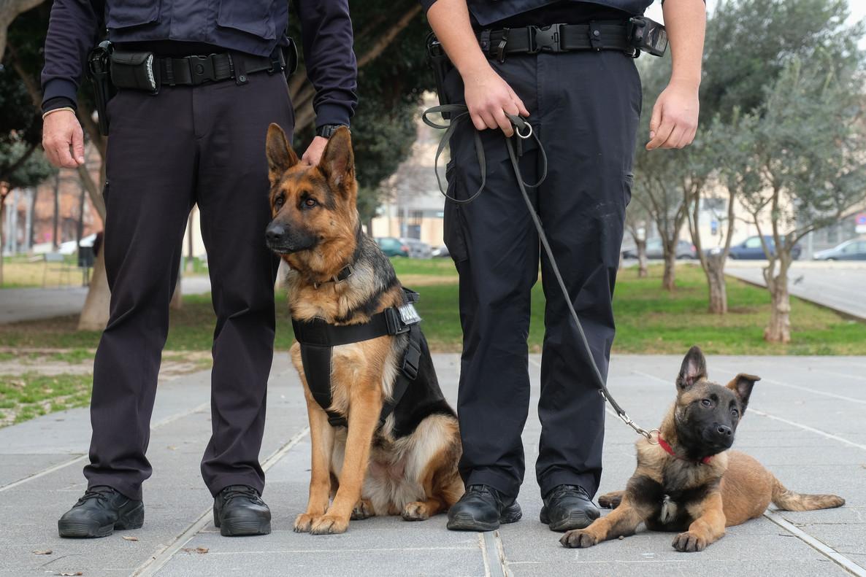 La Policía Municipal de Vildecans hará una exhibición con sus perros el viernes.