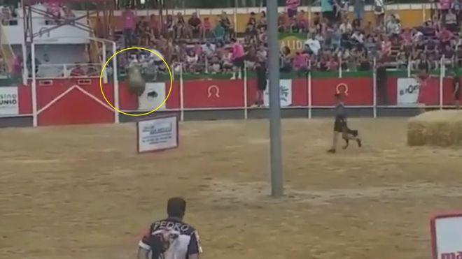 Un toro salta la barrera de la plaza en un encierro