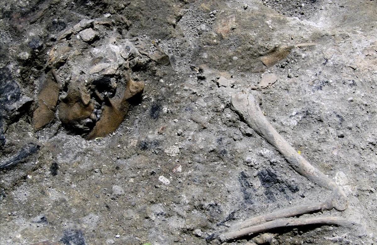 Los restos delperro encontrados entre los vestigios del siglo III, probablemente el animal pereció en el mismo siniestro que consumió la estructura de la casa.