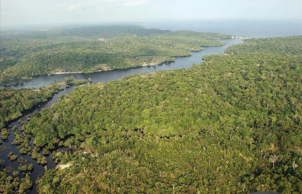 Solucions contra el canvi climàtic (5): aprofitar l'ajuda de la natura