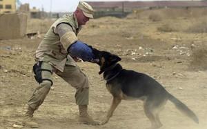 Entrenamiento de perros del ejercito americano.