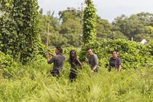 Andrew Lincoln, Danai Gurira, Ross Marquand yAlanna Masterson, en una imagen de The walking dead.