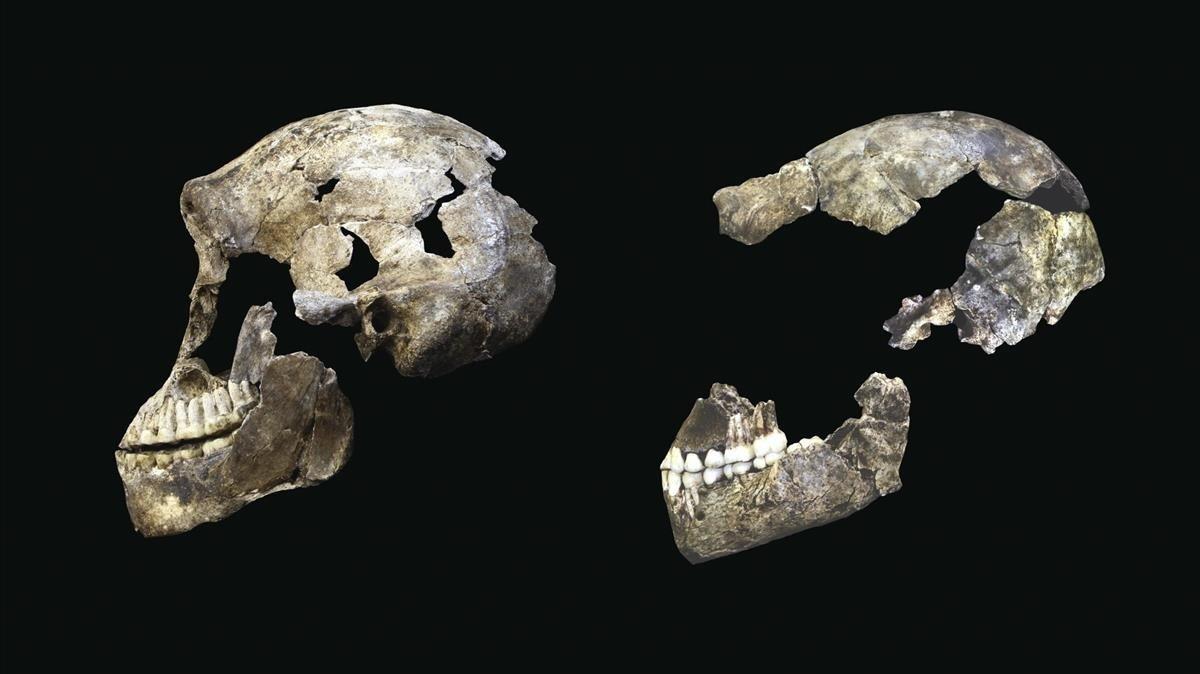 La guerra dels cranis