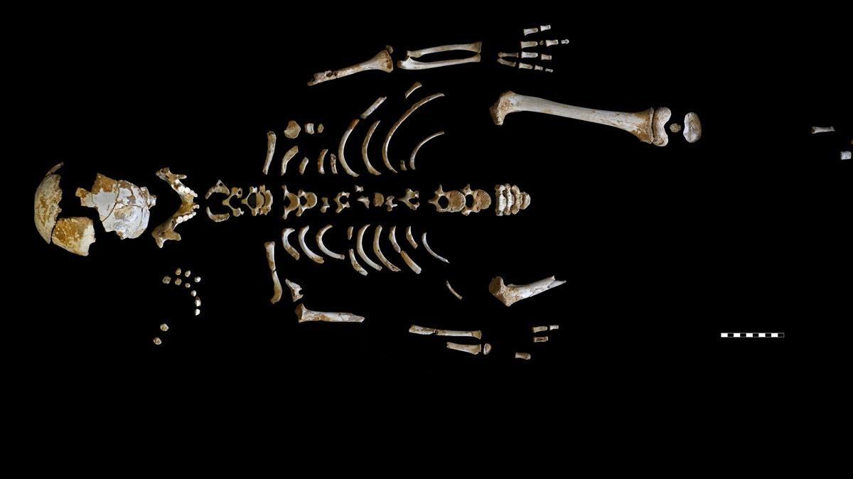 Reconstrucción del esqueleto del niño encontrado en el yacimiento de El Sidrón, en Asturias.