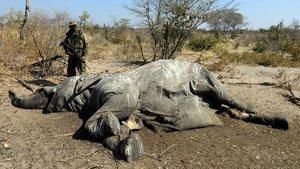¿Per què moren els elefants de Botswana?