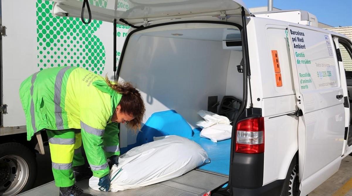 Servicio de recogida animales muertos madrid