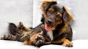 La empresa texana ViaGen Pets es líder en EEUU en la clonación de mascotas.
