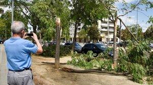 Árboles caídos por el temporal de lluvias en Lleida, este sábado.