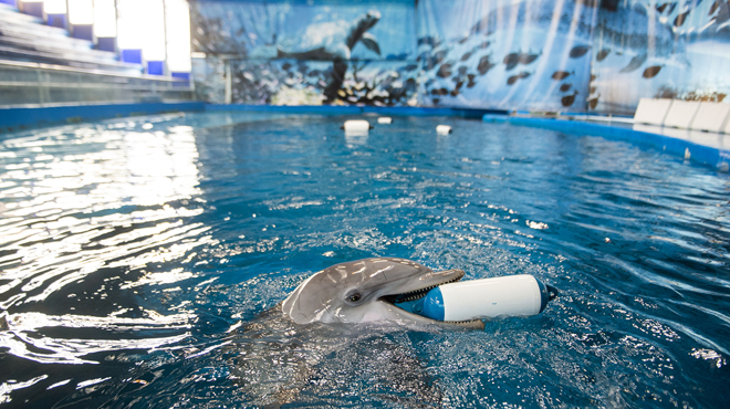 El màxim expert espanyol en cetacis planta Colau en el debat sobre el futur del zoo