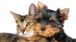 Un estudiosugiere que los perros, al tener mayor cantidad de neuronas, serían más inteligentes que los gatos