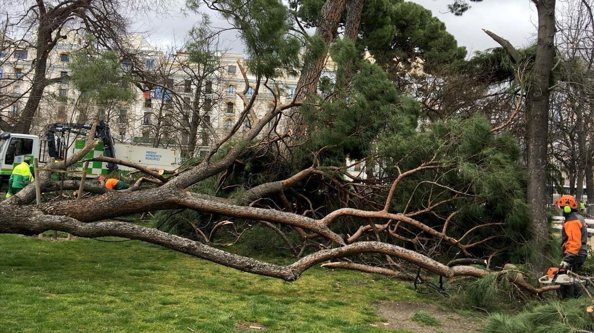 Lugar donde ha fallecido unniño tras caerle una rama de un árbolen el Parque del Retiro,este sábado.