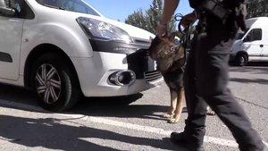 Així va enxampar un gos policia uns traficants de droga a Barcelona | Vídeo