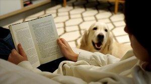 Una estudiantes de Secundaria lee una novela en su casa.