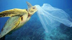 Una tortuga marina, con un plástico en la boca.