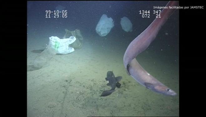 Los desechos de plástico y de basura llegan a lo más profundo del Océano Pacífico.