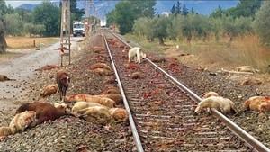 Un Euromed atropella un ramat d'ovelles a Mont-Roig del Camp