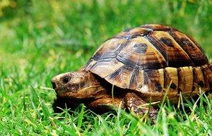 Autocontrol per a nens amb la tècnica de la tortuga