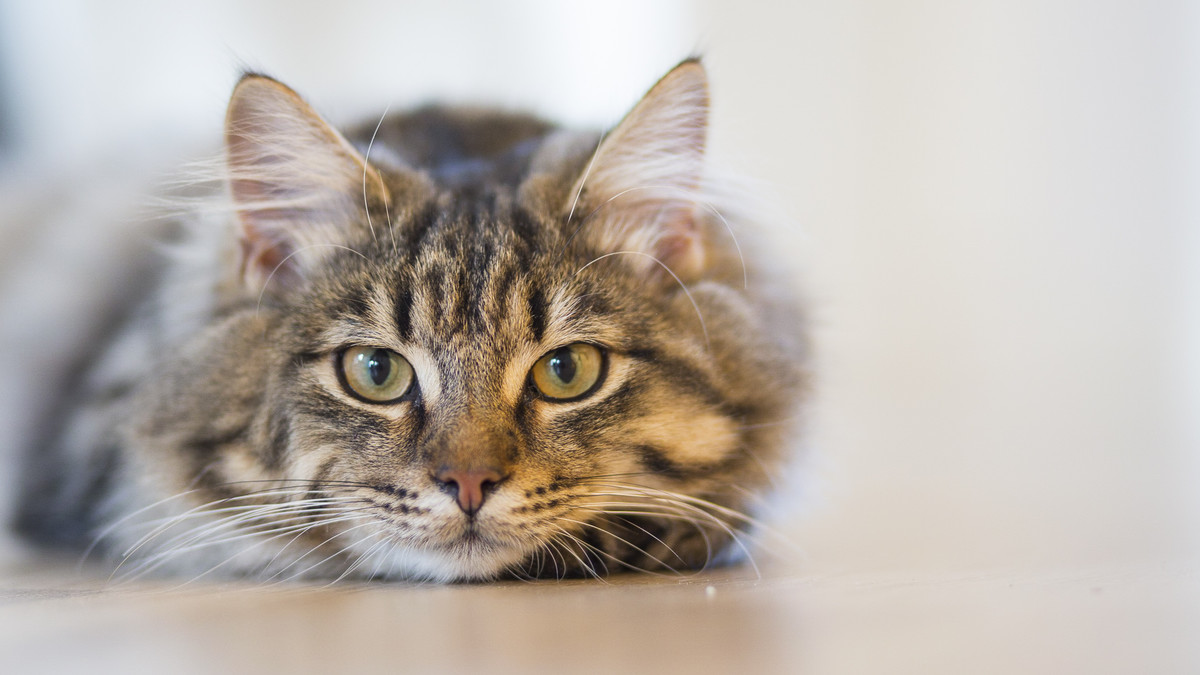 Un gato en una imagen archivo.