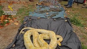 Golpe al tráfico de reptiles protegidos