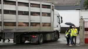 Inspecció de Treball multa amb 8,1 milions d'euros 110 empreses càrnies a Catalunya