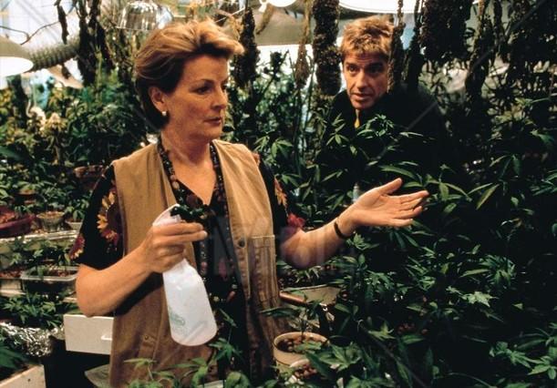 El Jardin De La Alegria Una Comedia Amable Con Brenda Blethyn