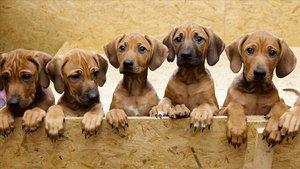 Una camada de perros.