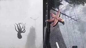 Una pluja de pops i crustacis sorprèn els habitants d'una ciutat xinesa