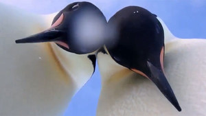 Los dos pingüinos protagonistas del selfie de la Antártida.