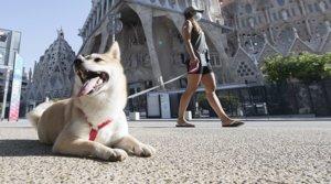 Una mujer pasea a su perro por los alrededores de la Sagrada Família, casi desiertos, el sábado 8 de agosto.