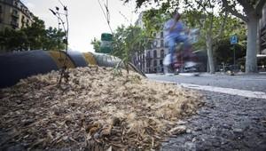 El polen de losplataneros acumulado en la plaza de Tetuán conGran Via.