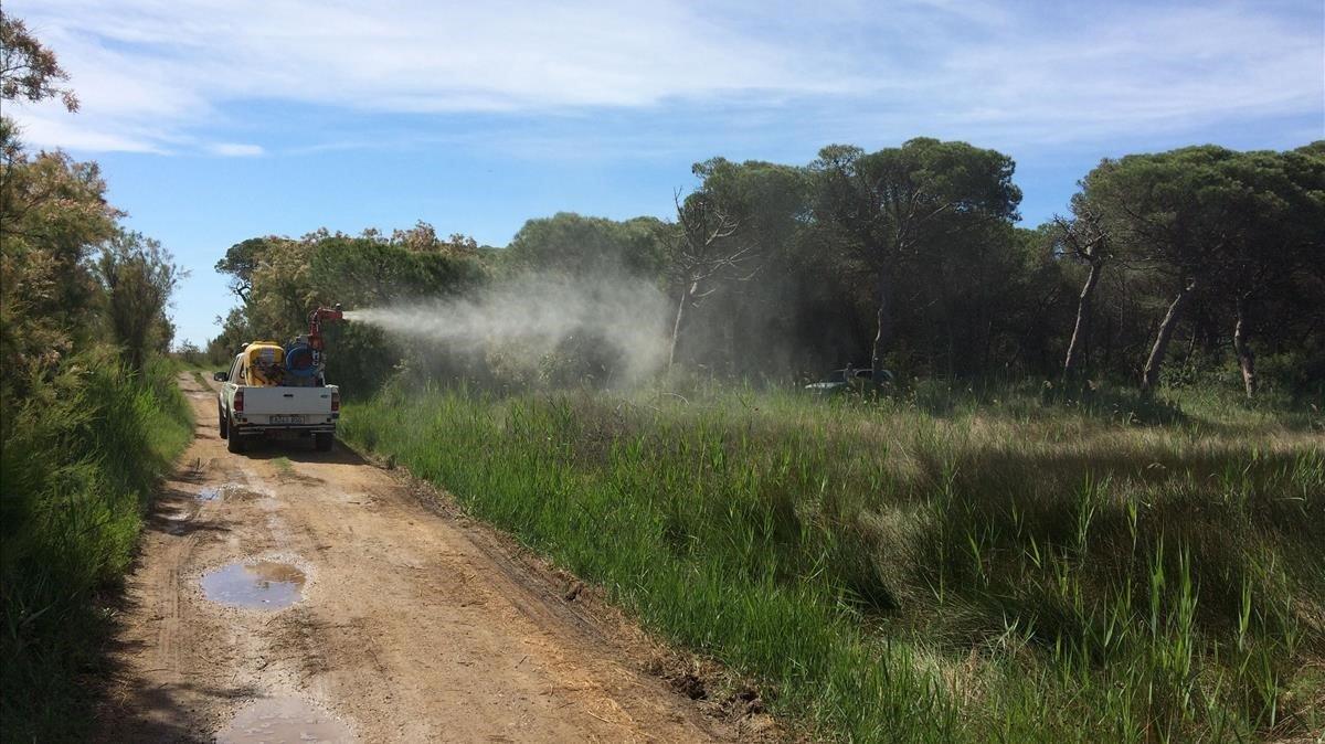 Tratamiento con producto biológico contra larvas de mosquito sobre zonas inundables con nebulizadora, en el Prat de Llobregat.