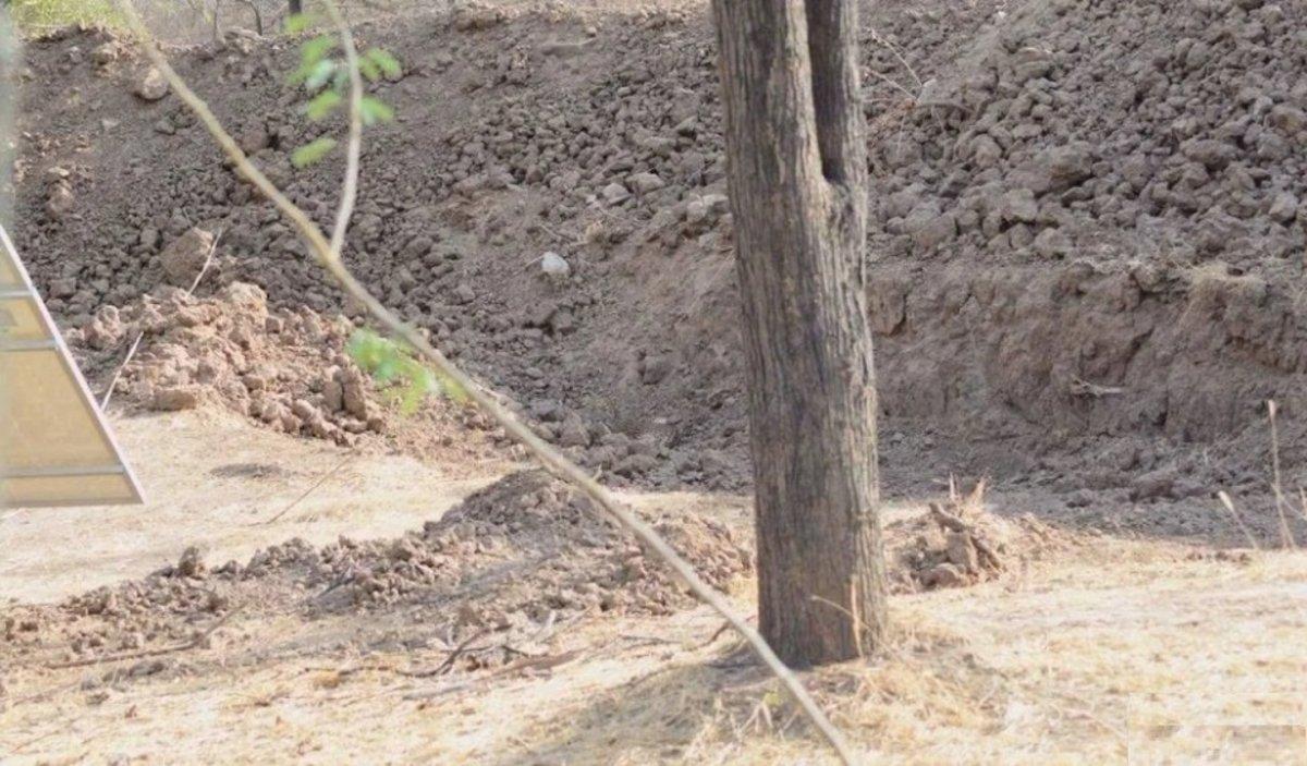 ¿Dónde está el leopardo? ¡Un nuevo desafío viral que nadie puede resolver!