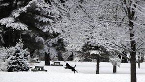 Un perro se divierte en la nieve fresca durante los últimos días del invierno en Maine, Estados Unidos