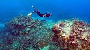 Un submarinista bucea en la zona cercana a la isla de Lady Elliot en la costa australiana de Queensland.