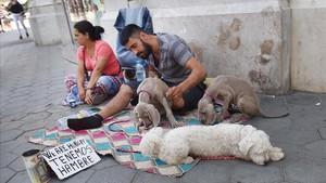 El negoci dels 'gossos captaire' envaeix els carrers del centre de Barcelona