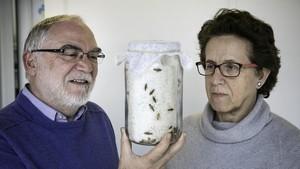 Xavier Bellés y Maria Dolors Piulachs, investigadores del Instituto de Biología Evolutiva de Barcelona (CSIC-UPF).